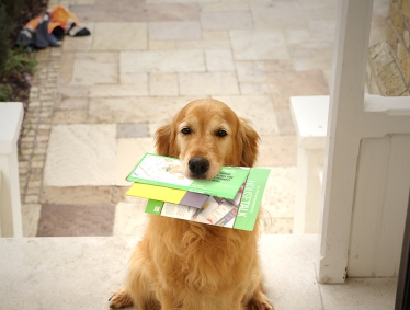 Dog Blog 4